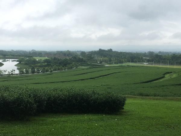 お茶のプランテーション農場_b0100062_10083213.jpg