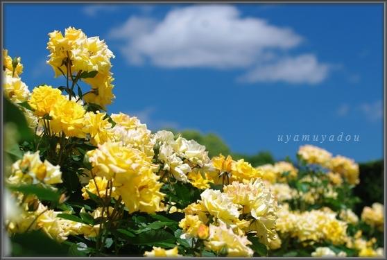 爽やかな五月晴れ_a0157263_21274335.jpg