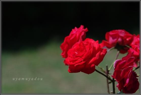 爽やかな五月晴れ_a0157263_21274463.jpg