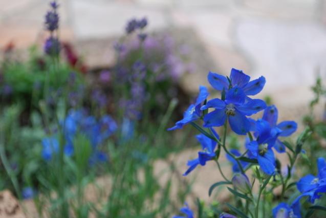 初夏の花_a0221484_10383215.jpg