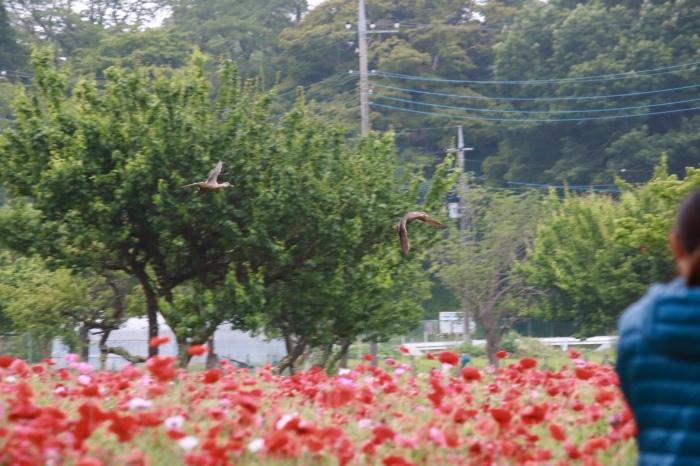 【あけぼの山農業公園 - 2 -】_f0348831_08083651.jpg