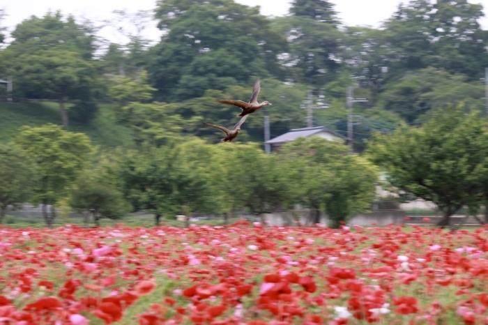 【あけぼの山農業公園 - 2 -】_f0348831_08084320.jpg