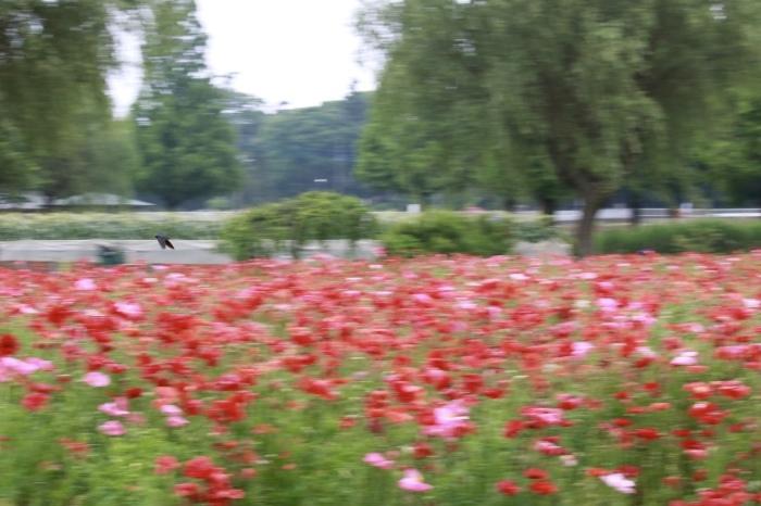 【あけぼの山農業公園 - 2 -】_f0348831_08084433.jpg