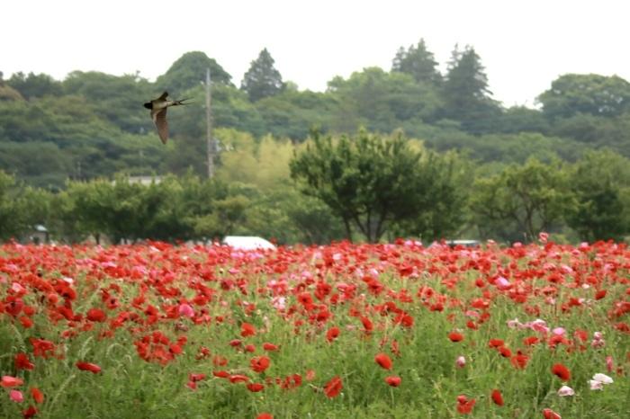 【あけぼの山農業公園 - 2 -】_f0348831_08084930.jpg
