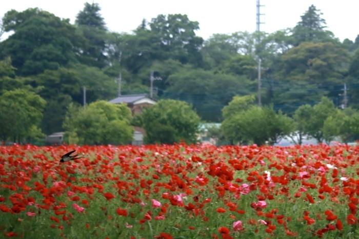 【あけぼの山農業公園 - 2 -】_f0348831_08085625.jpg