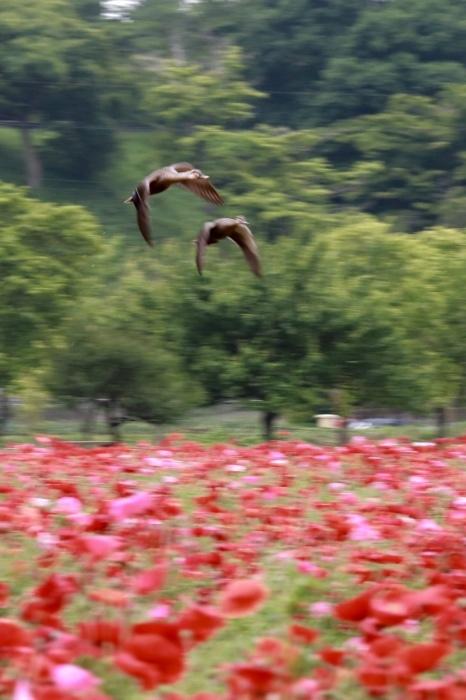 【あけぼの山農業公園 - 2 -】_f0348831_17532484.jpg