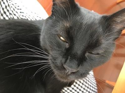 黒猫はまっくろぢゃない_e0359436_11272350.jpg