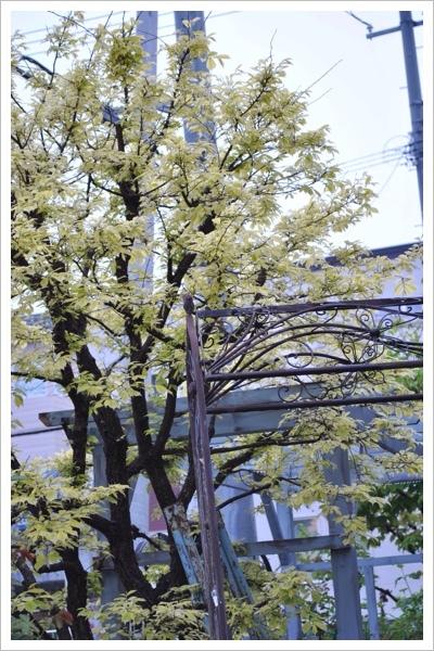 *今日の庭*_e0159050_06135732.jpg