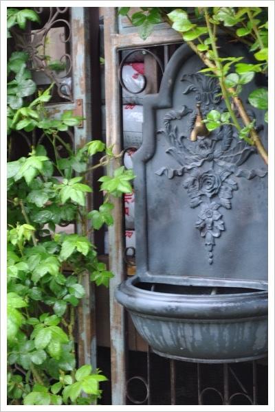 *今日の庭*_e0159050_06145351.jpg