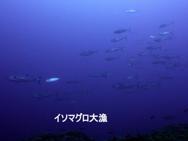 5月28日 ハーリー(海神祭)前日_d0113459_09220833.jpg