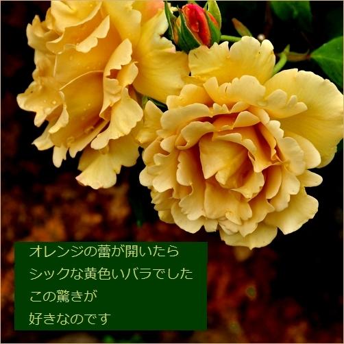 b0154475_23485848.jpg