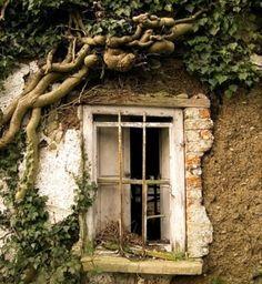 古い洋館の窓-2_d0335577_00054197.jpg