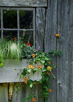 木造の家屋と窓_d0335577_00162353.jpg