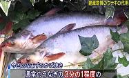 ikan patin_a0051297_14525428.png