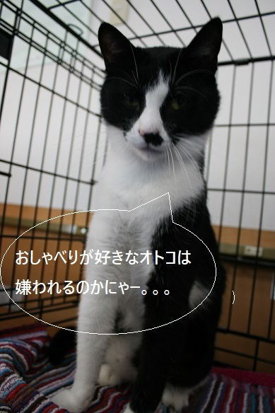 5/28 RADAC里親会_f0242002_20321217.jpg