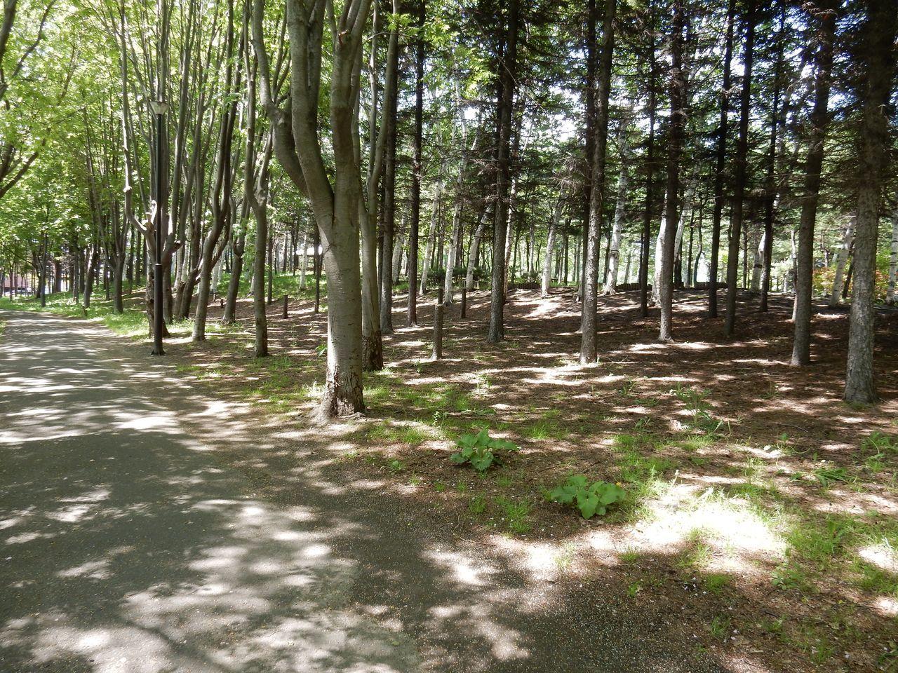 初夏の伏古公園_c0025115_21450771.jpg