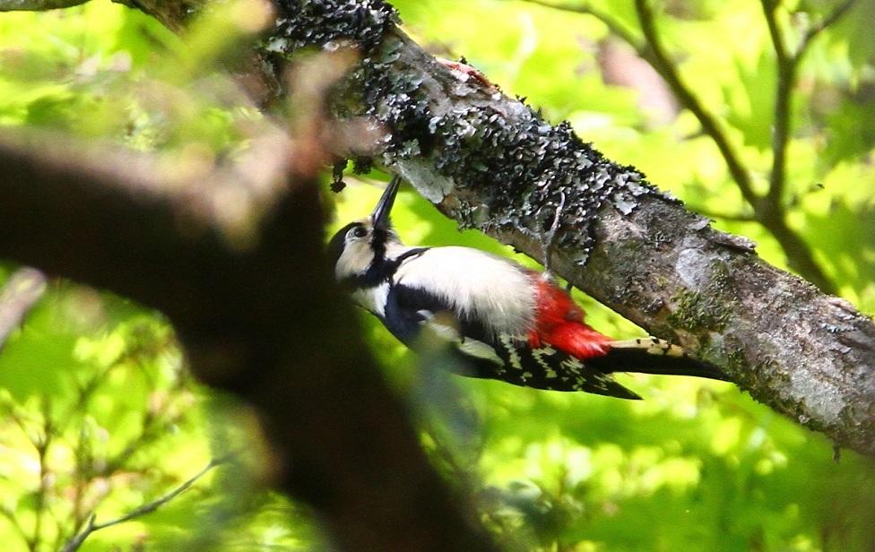 大台ヶ原で撮った鳥たち_f0364220_15173946.jpg