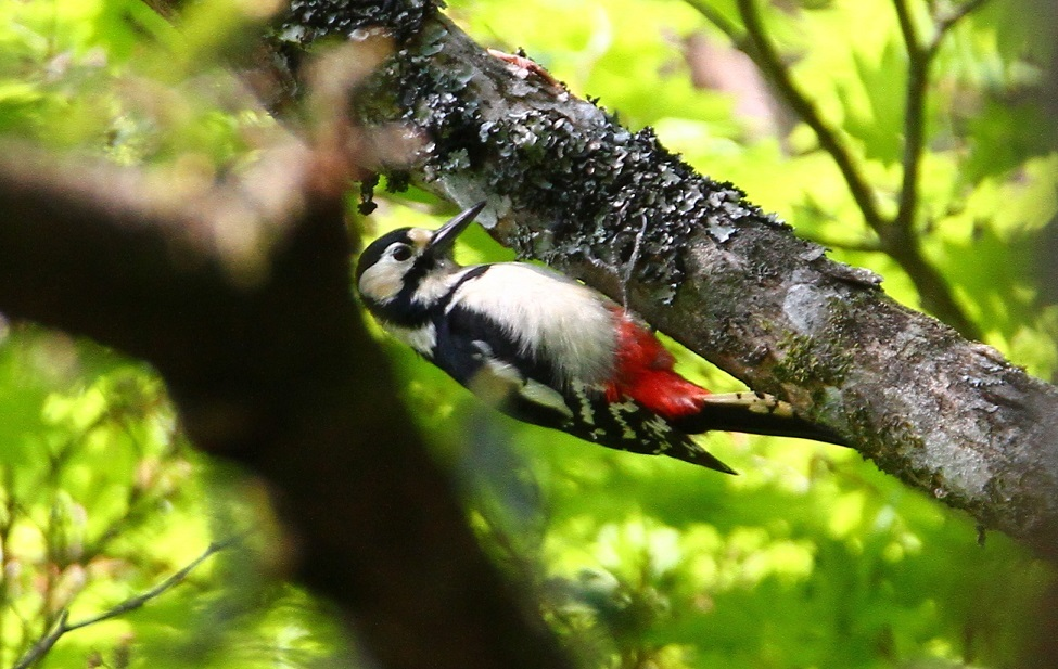 大台ヶ原で撮った鳥たち_f0364220_15180297.jpg