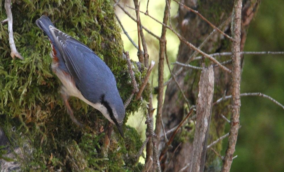 大台ヶ原で撮った鳥たち_f0364220_15201295.jpg