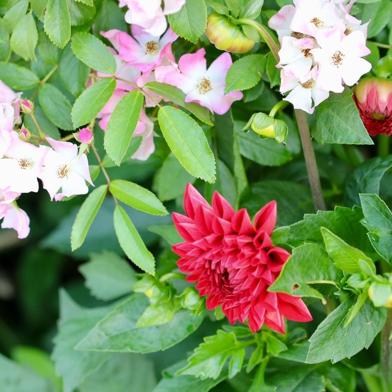 今日のお庭の様子30,May,2017_c0366722_07414766.jpg