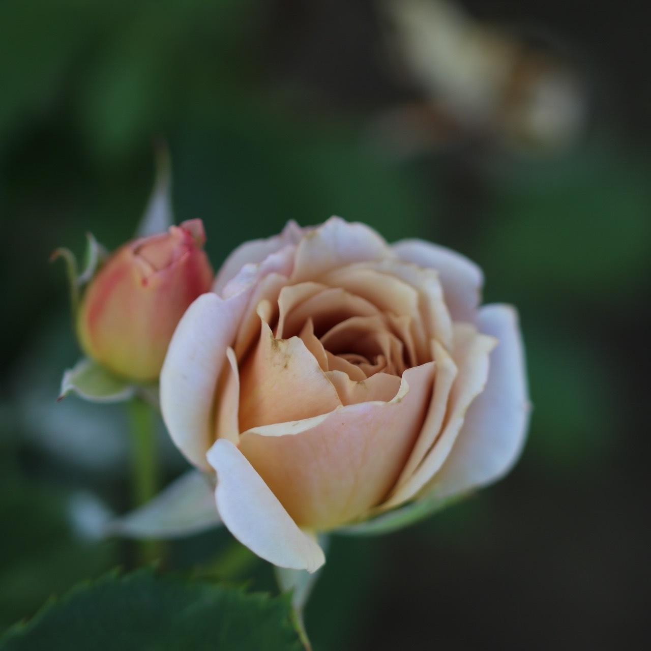 今日のお庭の様子30,May,2017_c0366722_07415563.jpg