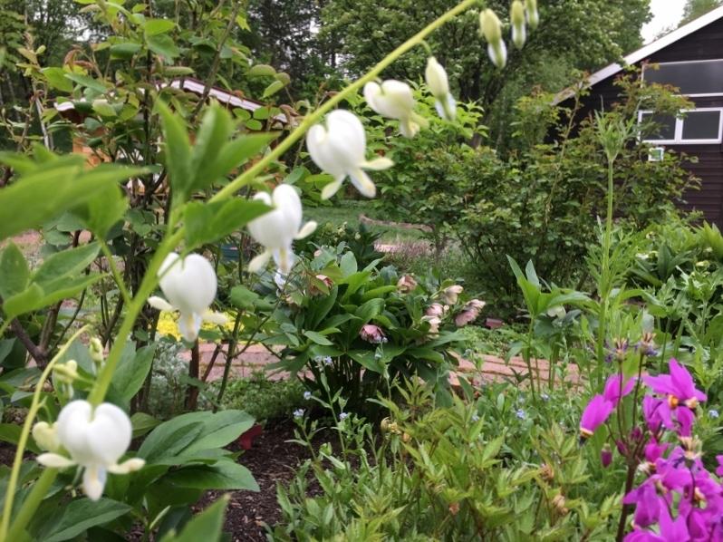 次々咲いてどんどん咲いて_e0326953_14085979.jpg