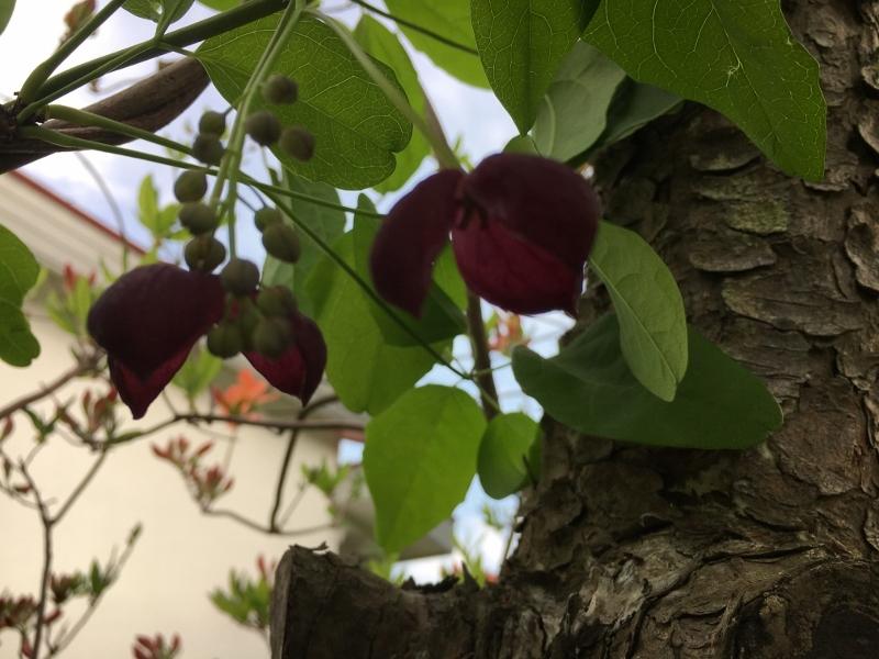 次々咲いてどんどん咲いて_e0326953_14094127.jpg