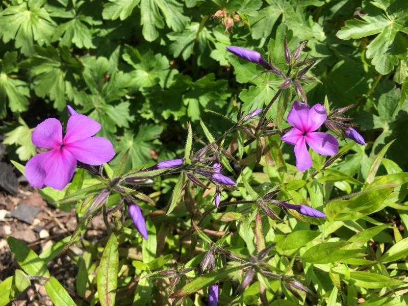 次々咲いてどんどん咲いて_e0326953_14183568.jpg