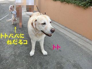 d0353074_17464057.jpg