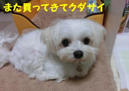 b0193480_15483881.jpg