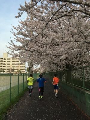 なかなか咲かなかった今年の桜_f0220089_17103481.jpg