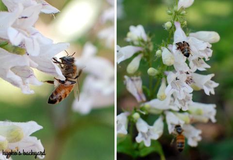 裏庭の花壇と菜園の様子(5月下旬)。ワイルドローズ・バスソルト。_b0253205_01584656.jpg