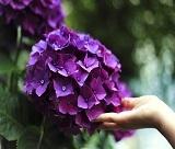 美しいあじさい&6月のイメージショット!