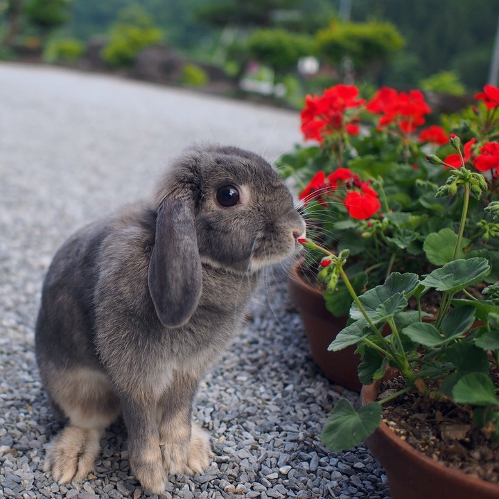 花とウサギ_a0268412_22381102.jpg