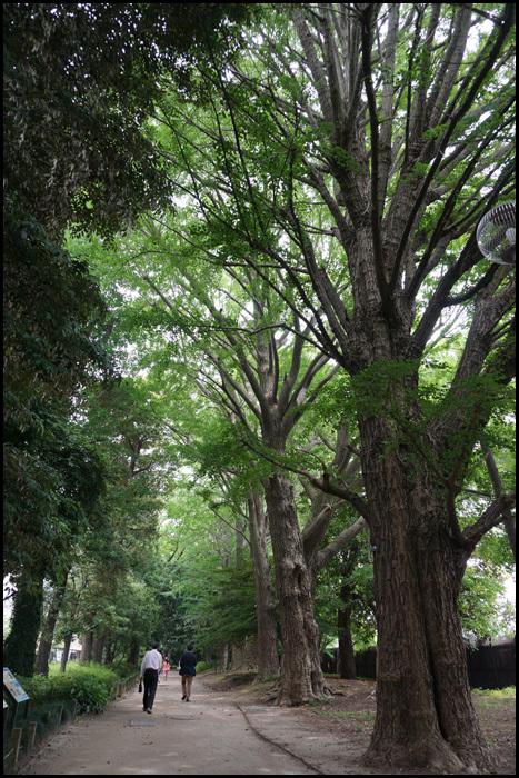新宿御苑:大木戸門_b0019313_18032201.jpg