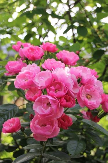 苺の季節_b0132338_08345365.jpg
