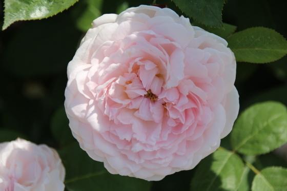 花フェスタ記念公園 モネの池_b0132338_20331436.jpg