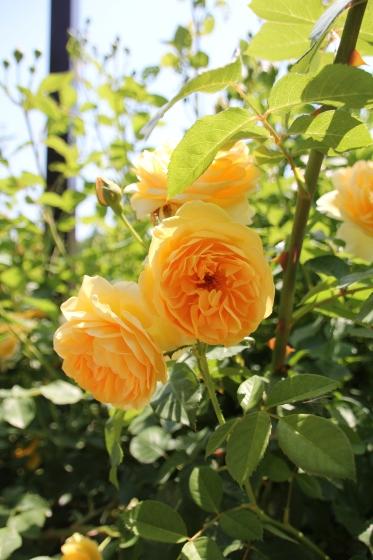 花フェスタ記念公園 モネの池_b0132338_20404814.jpg