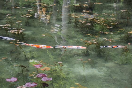 花フェスタ記念公園 モネの池_b0132338_20500563.jpg