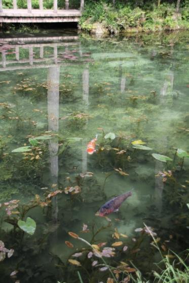 花フェスタ記念公園 モネの池_b0132338_20550544.jpg