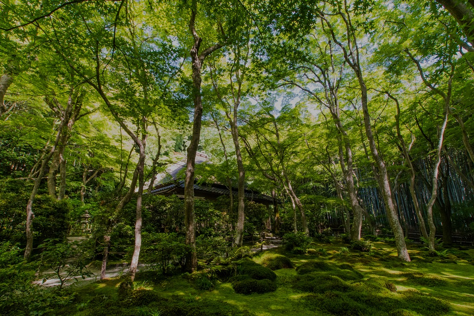 祇王寺の新緑_e0363038_985156.jpg