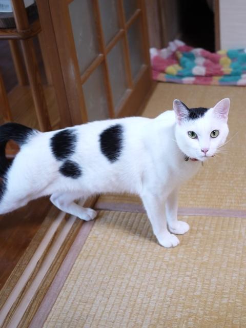 猫のお留守番 たらくん編。_a0143140_14545240.jpg