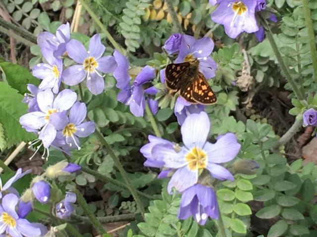 花の季節到来_b0135948_17141471.jpg