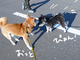 伊佐兄とおいかけっこリオ君_b0057675_09131874.jpg