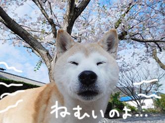 伊佐兄とおいかけっこリオ君_b0057675_09142617.jpg