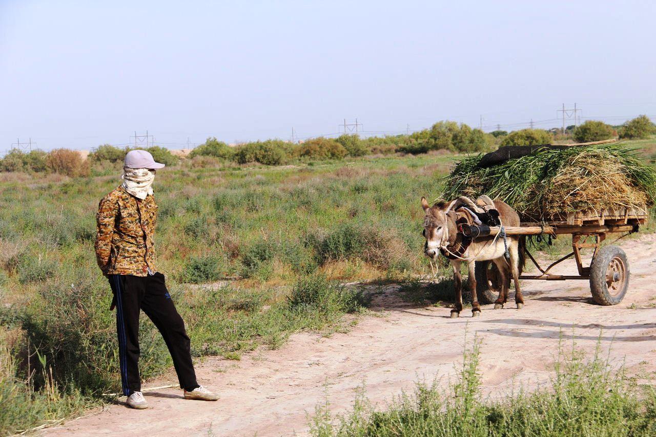 トルクメニスタンの旅(17) 世界遺産メルブ遺跡 キズカラ_c0011649_23470302.jpg