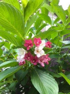 庭の花_f0204368_01043362.jpg