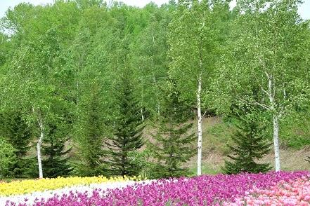 滝野すずらん丘陵公園 「チューリップ、クリスマスローズ、すずらん」観てきました。_f0362073_19554393.jpg