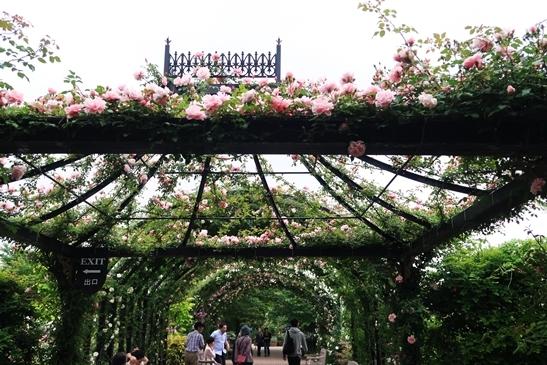 横浜イングリッシュガーデン 薔薇が満開_d0353281_00345328.jpg