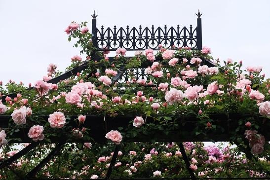横浜イングリッシュガーデン 薔薇が満開_d0353281_00351502.jpg